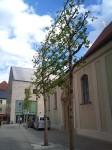 Regensburg, oak tree, public art